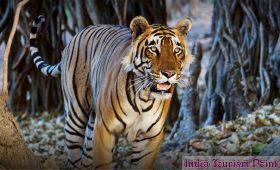 Bandhavgarh National Park Images