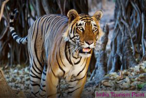 Bandhavgarh National Park Images