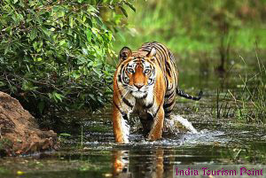 Bandhavgarh National Park Photo