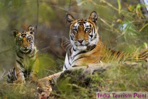 Bandhavgarh National Park Photos