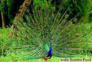 Bandhavgarh National Park Pictures