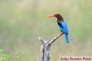 Bharatpur Bird Sanctuary Photo