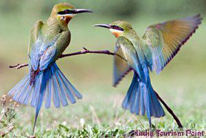 Bharatpur Bird Sanctuary Photos