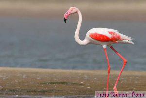 Bharatpur Bird Sanctuary Pic