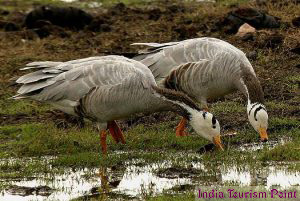 Bharatpur Bird Sanctuary Pics