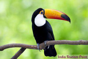 Bharatpur Bird Sanctuary Pictures