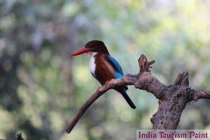 Bharatpur Bird Sanctuary Still