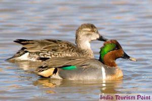 Bharatpur Bird Sanctuary Stills