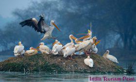 Bharatpur Bird Sanctuary Wallpapers