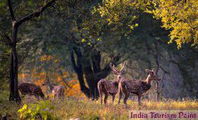 Kanha National Park Photo