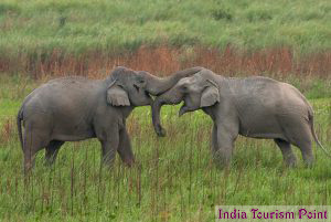Kaziranga National Park Elephant Pics