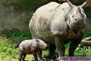 Kaziranga National Park Rhino Wallpapers