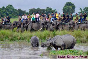 Kaziranga National Park Rhinos And Elephant Images