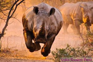 Kaziranga National Park Rhinos Pics