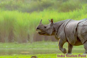 Kaziranga National Park Rhinos Pictures