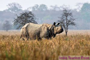 Kaziranga National Park Rhinos Stills