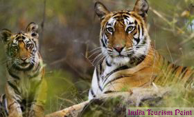 Kaziranga National Park Tourism Tiger Image