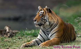 Ranthambore Tiger Reserve Photo Images