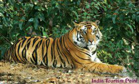 Sariska Tiger Reserve Pic