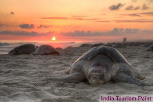 Beaches of India Tourism Image Gallery