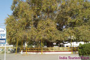 Bodhgaya Tour and Tourism Pic