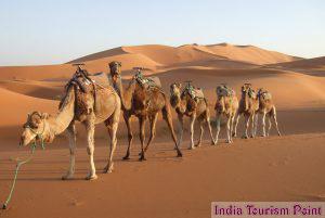 Desert Safari Tourism Photos