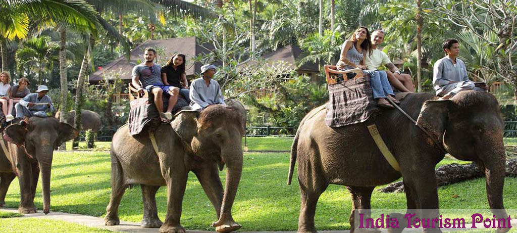 Elephant Safari Tour and Tourism Image Gallery