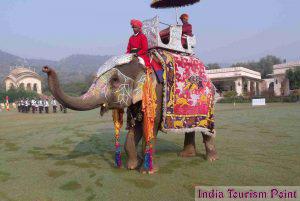 Elephant Safari Tour and Tourism Images