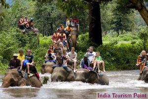 Elephant Safari Tourism Image