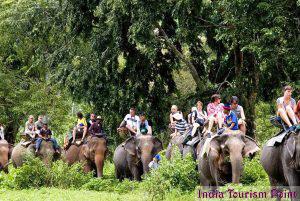 Elephant Safari Tourism Image Gallery