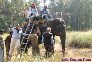 Elephant Safari Tourism Photo
