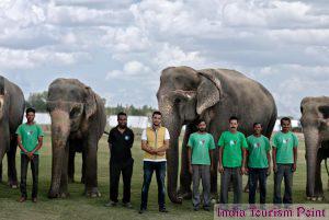 Elephant Safari Tourism Photo Gallery
