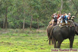 Elephant Safari Tourism Photos