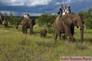 Elephant Safari Tourism Pic