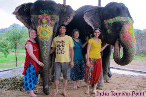 Elephant Safari Tourism Pics