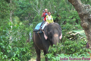 Elephant Safari Tourism Still