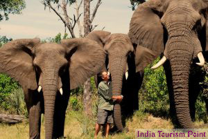 Elephant Safari Tourism Wallpaper