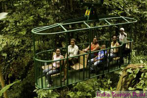 Jungle Tourism Photo