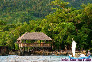 Jungle Tourism Pic