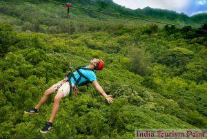 Jungle Tourism Pics
