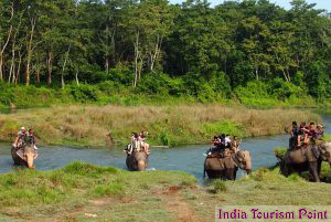 Jungle Tourism Still