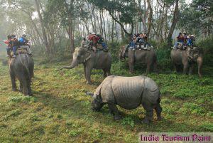 Jungle Tourism Stills